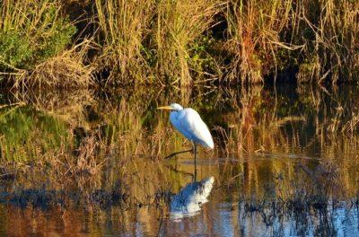 Waterfowl Birding Weekend